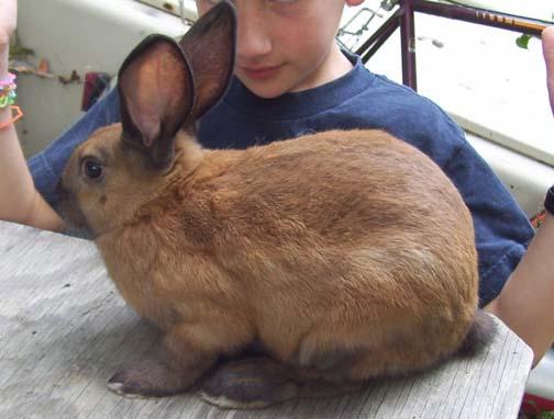 Cinnamon Rabbits