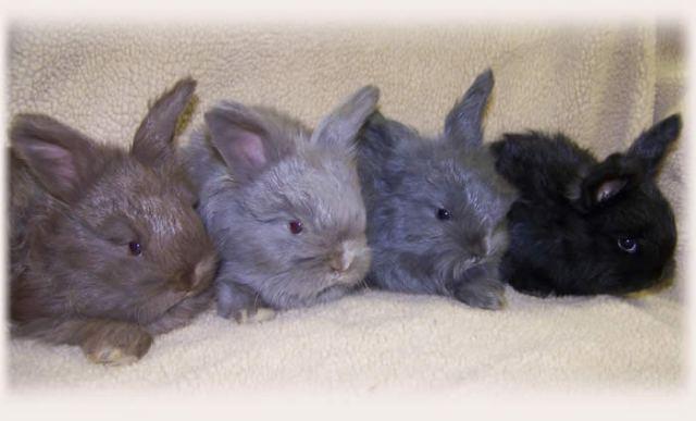 Lilac Rabbits