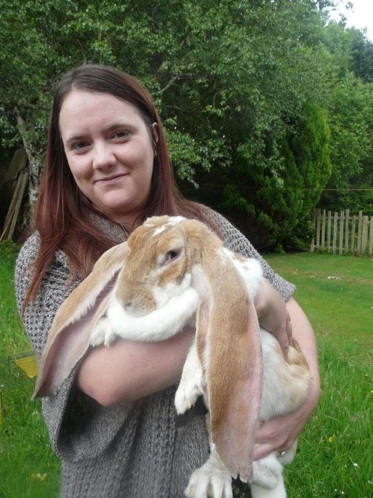English Lop Rabbits
